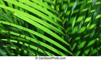 Green leaf in nature - Close up of a Green leaf in nature...