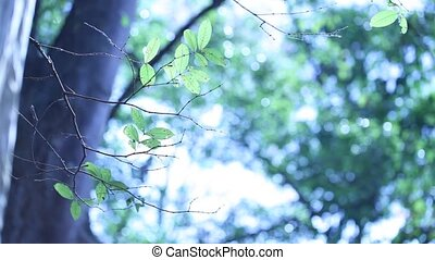 Forest green background - Forest leaves and trees in nature...