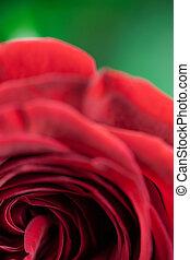 cierre, solo, rosa, Arriba, rojo