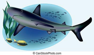 Marine life with shark, vector illustration