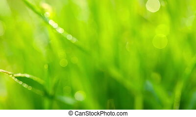 green grass and drops of morning de