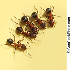 Group of curious ants