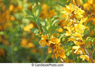 Blooming flowers - Beautiful blooming spring yellow flowers...