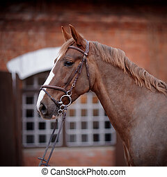 Portrait of a red horse. - Red stallion. Portrait of a red...