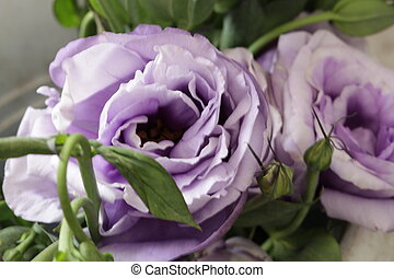 purple rose growed up