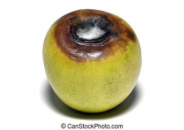 amarela, envelhecimento, maçã, isolado, branca, fundo,...