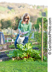Woman Watering Allotment - A woman uses a watering can to...