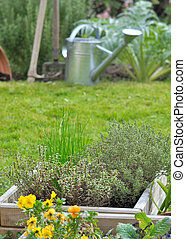 aromatic plants in pot - aromatic plants in a pot in front...
