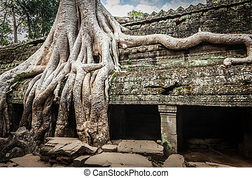 Travel Cambodia concept background - ancient ruins with tree...