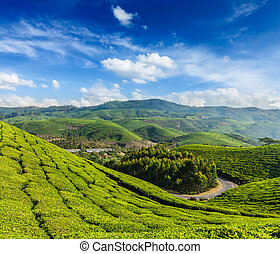Green tea plantations in Munnar, Kerala, India - Kerala...