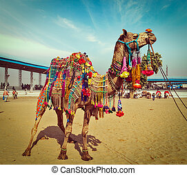 Camel at Pushkar Mela, Rajasthan, India - Vintage retro...