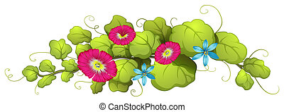 A vine plant with blue and carnation pink flowers -...