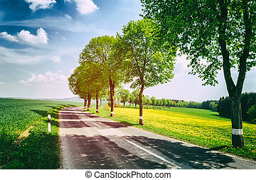 Country road at sunny summer day