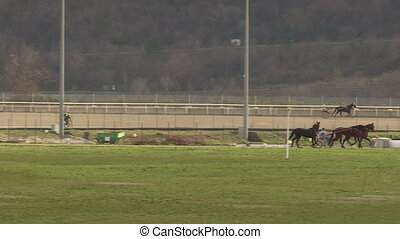 Horses training in hippodrome - Horses and cyclists training...