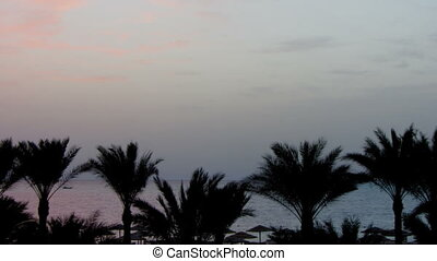 beautiful landscape with palms and sunrise over sea -...