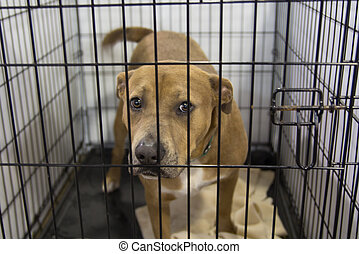 Pet Adoption - A dog in an animal shelter, waiting for a...