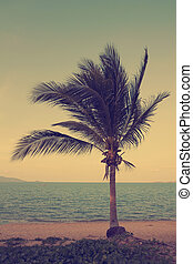 Vintage coconut palm tree on the beach