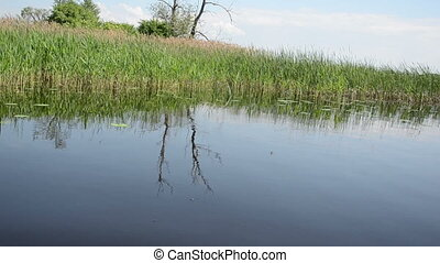 lake bulrush - view from the boat many long green water...
