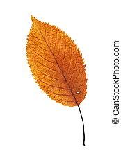 美しい, オレンジ, 葉