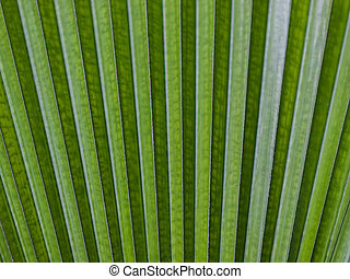 Green Leaf - Close up of a tropical green leaf in a fan...
