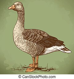 vector engraving goose in retro - vector illustration of...