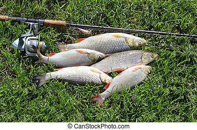 fishing catch on the grass and fishing gear - fishing catch...