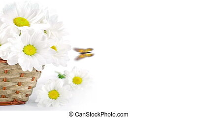 White flowers, field camomiles in a braided basket