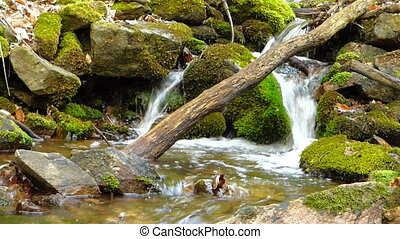Small creek in forest