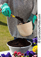 Woman hands replanting flowers into a pot