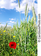 Spikes of wheat and flowers
