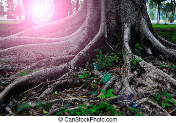 Closed up big tree roots and sun beam