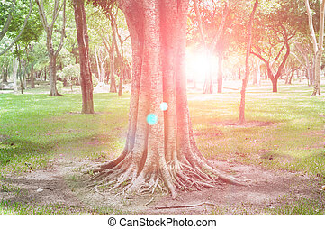 Tree and sun light in spring forest