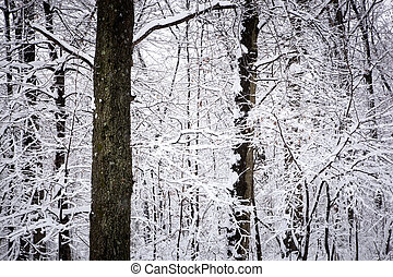Snowbound - Winter woods are covered with white, shimmering...