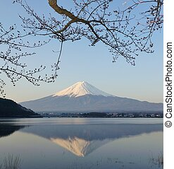 Mt Fuji and Cherry Blossom - Reflection of Mt Fuji and...