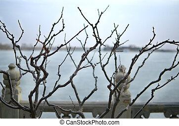 Bare Branches Splayed Before Frozen Lake Kunming Outside The...
