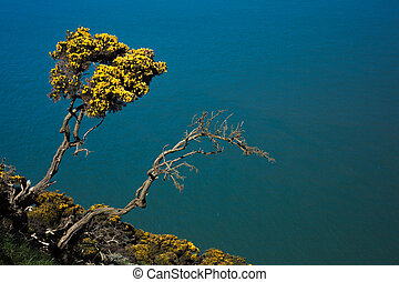 Gorse growing on cliffside - Gorse growing from a cliffside