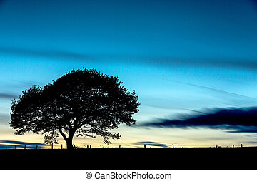 Tree before sunset with cloudy sky - An old oak tree...