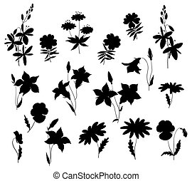 Silhouettes of wild flowers. Isolated on white. Vector...