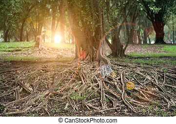 Sun beams pour through trees in forest