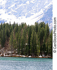 large pine trees on the shores of Alpine Lake with the Alps...
