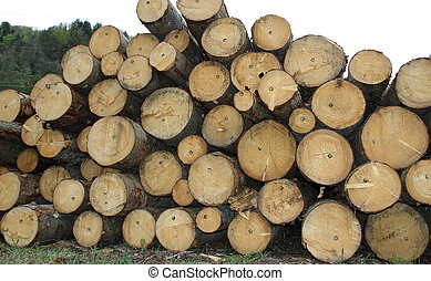 pile of logs cut by lumberjack in the Woods - big pile of...