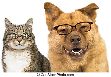 Dog and cat wearing glasses - Dog and cat on white...