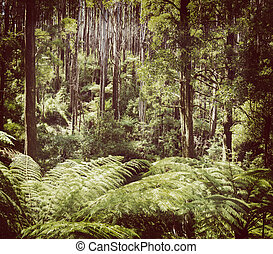 Fern Forest Filtered - Lush green ferns, tree ferns and...