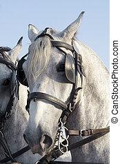 Horse - Close up of horse head