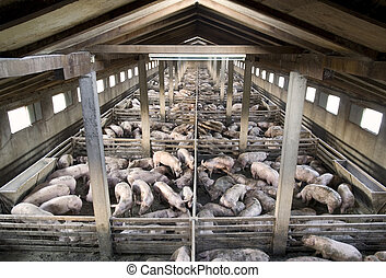 Pigs - Small pig farm from above