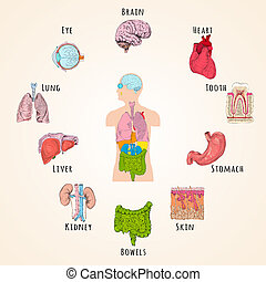 Human anatomy concept with body silhouette and organs icons...