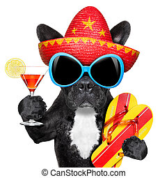 mexican dog - dog with martini glass and mexican hat