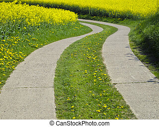 agrarian track - curved agrarian track through a canola...
