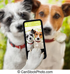 selfie dogs - couple of dog taking a selfie together with a...