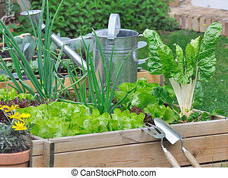 various lettuce and vegetables in vegetable patch -...